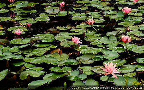 植物園散步_41.jpg