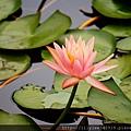 植物園散步_43.jpg