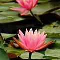 植物園散步_44.jpg