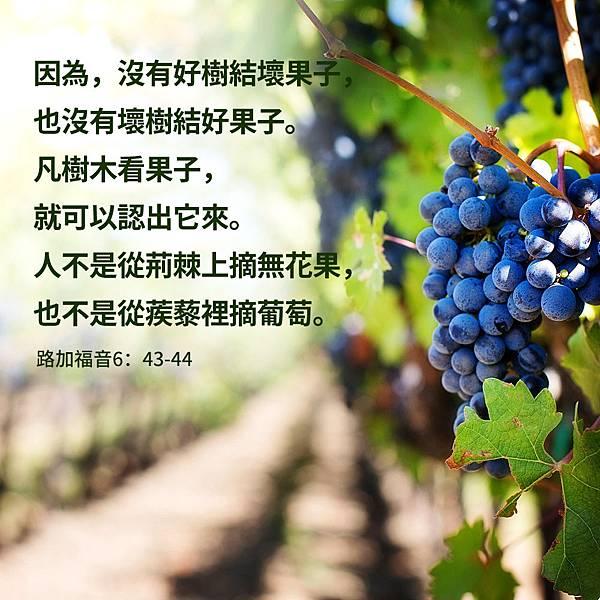 路加福音-H019S-2-CN (1).jpg