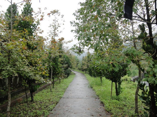 賽斯村楓葉步道