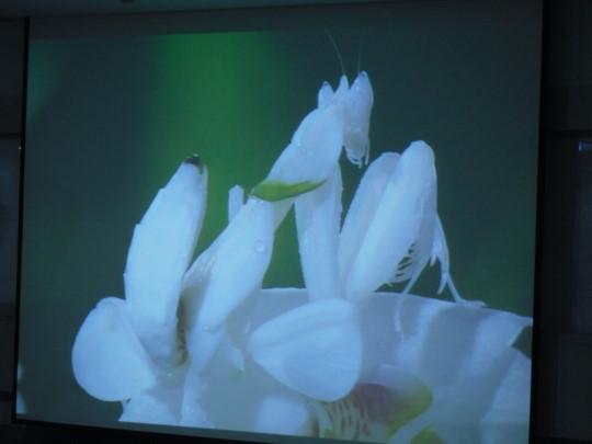 螳螂1.jpg