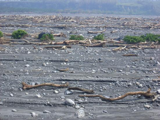 洪水沖下漂流木.jpg