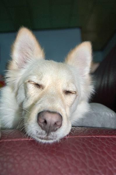 這張LuLu的睡姿,超像她媽媽NaNa