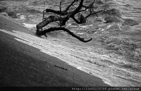 黑白19.jpg