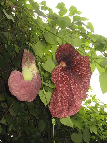 奇怪神奇的植物
