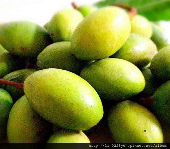土橄欖~偶阿嬤家種滴
