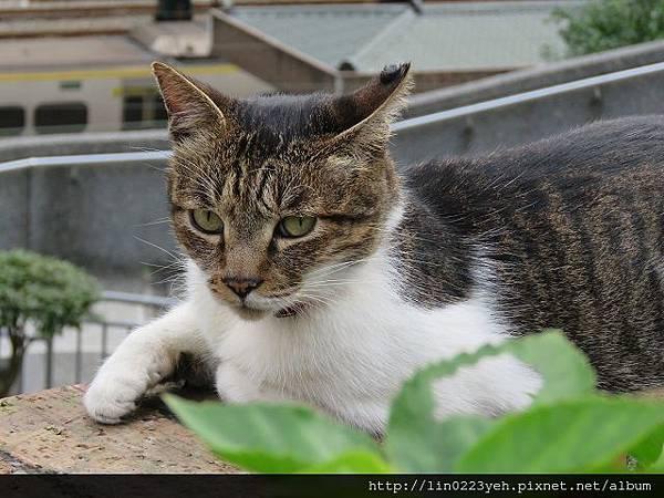 猴硐(貓村)~貓咪寫真之二