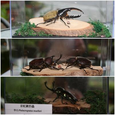 甲蟲綜合.jpg