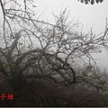 aDSC09592.jpg