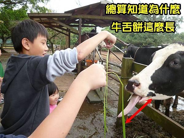 桃園楊梅埔心牧場4-1