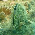 海底世界3.jpg