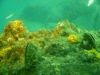 海底世界4.jpg