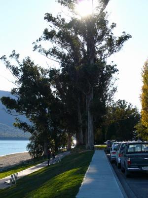 湖邊大樹.jpg