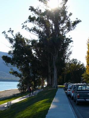 湖邊大樹1.jpg
