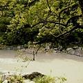 內洞森林遊樂區1.jpg