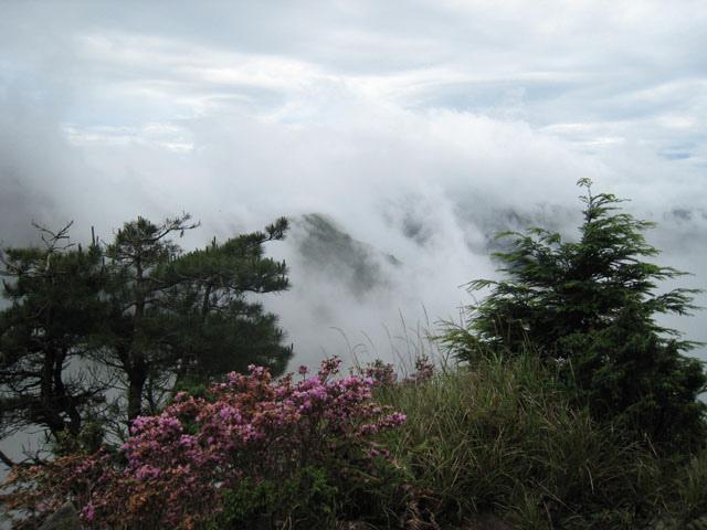 a23花朵與山景.JPG