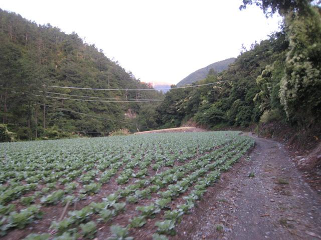 a25菜園產道.JPG
