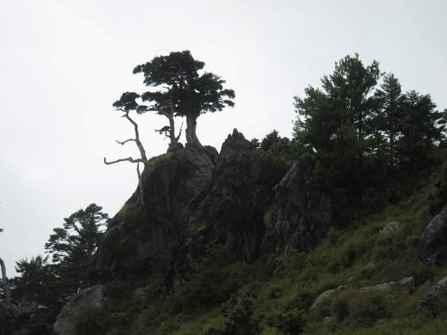 a35松石盆景.JPG