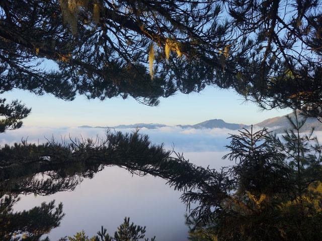 a58山徑雲海.JPG