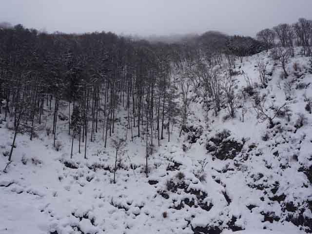 a38野猿公苑雪景.JPG