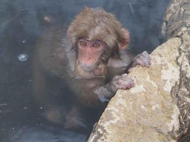 a44不怕生的小猴.JPG