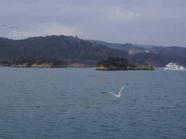 a25翱翔中的海鷗.JPG