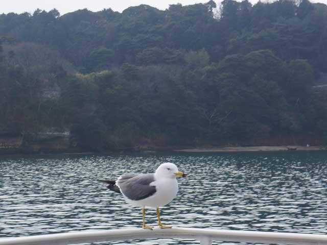 a30停留中的海鷗.JPG