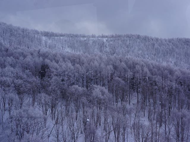 a23纜車上賞雪景.JPG