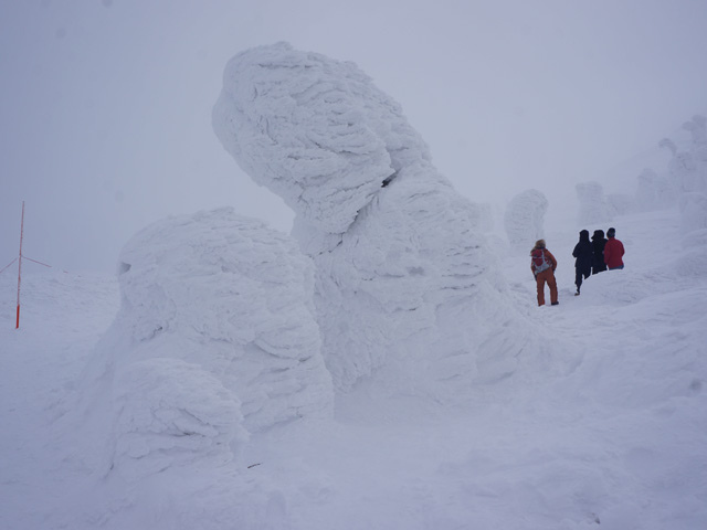 a40樹冰.JPG