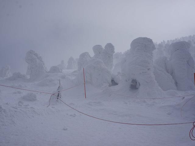 a41樹冰.JPG