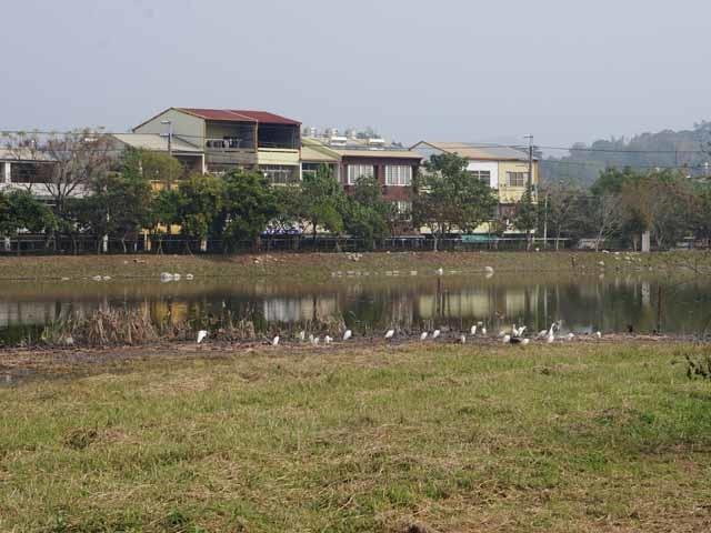 a42鳥類棲息樂園.JPG