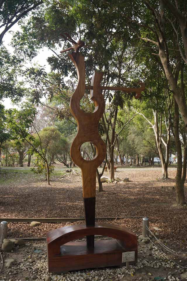 a49樟木、櫸木織.JPG