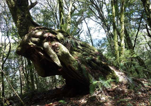a28特別的巨木