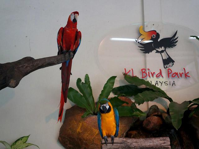 a45供拍照的鸚鵡.JPG