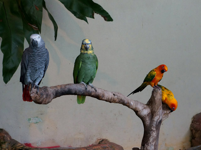 a46供拍照的鸚鵡.JPG
