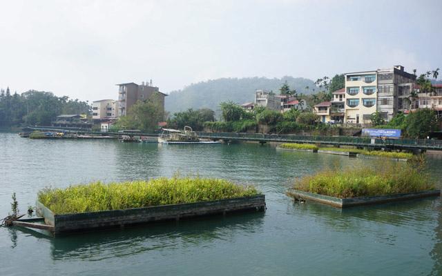 a51水生植物.JPG
