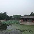 頤和園 - 蓮花池