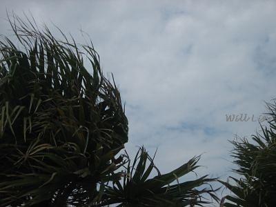 燈塔-超大的風.jpg