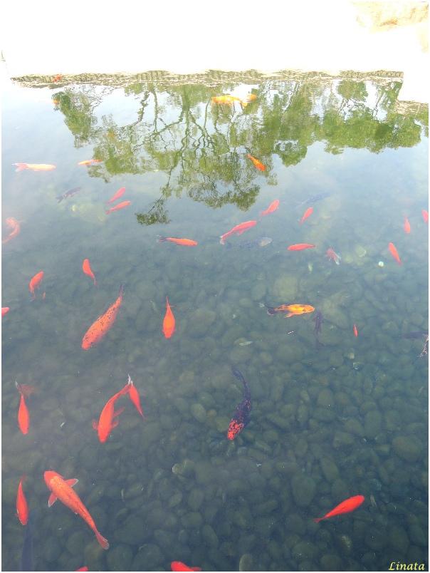 Suzhou080.JPG