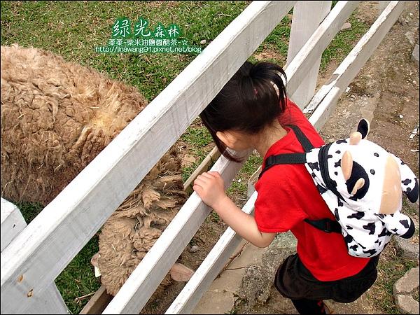 2010-0324-桃園-綠光森林 (13).jpg