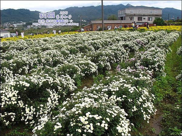 2010-1114-2010-銅鑼-杭菊芋頭節 (27).jpg