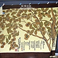2010-1026~1102-新埔-金漢柿餅 (8).jpg