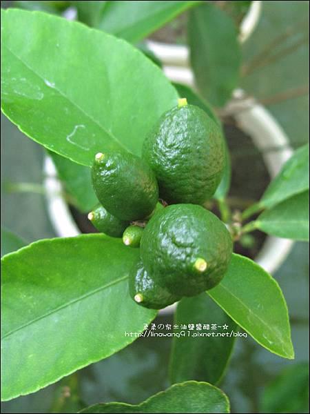 2011-0614-毛寶-小蘇打洗衣液體皂 (25).jpg