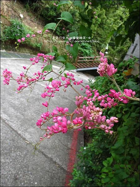 2010-0923-新竹新埔-陳家農場 (27).jpg