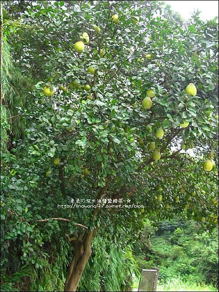 2010-0923-新竹新埔-陳家農場 (28).jpg