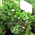2011-0521-金谷農場 (6).jpg