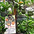 2011-0521-金谷農場 (7).jpg