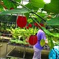 2011-0521-金谷農場 (8).jpg