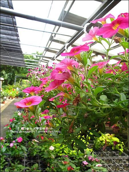 2011-0521-金谷農場 (9).jpg